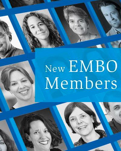 New EMBO Members