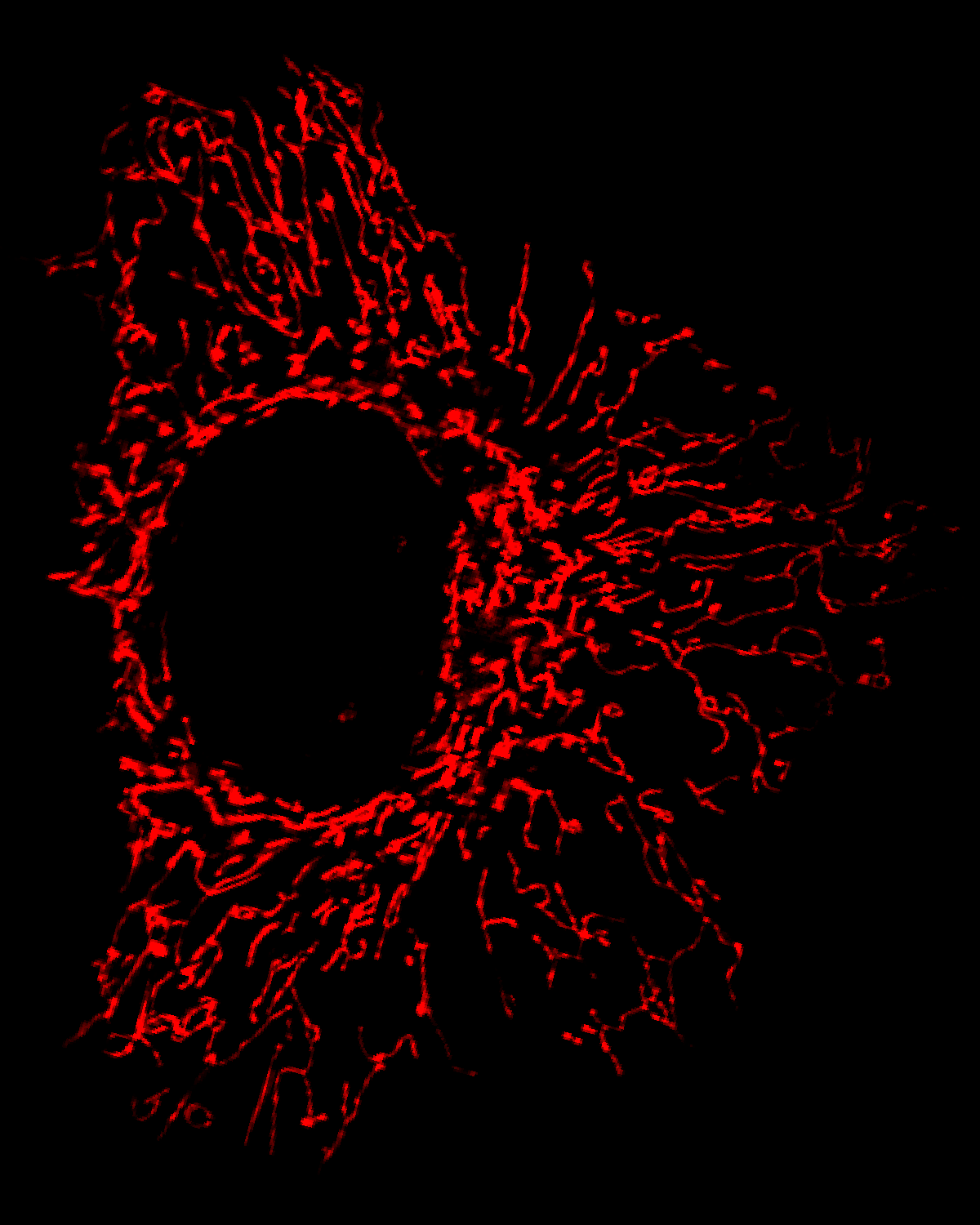The mitochondrial network of a U2OS cell