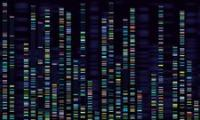 Genomic analysis visualisation credit Tetiana Lezunova